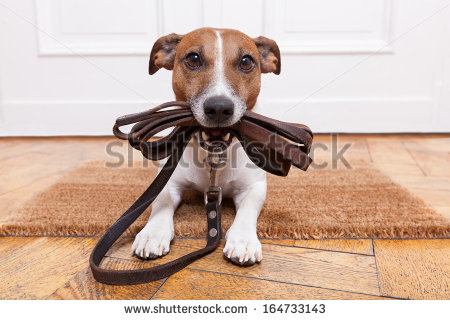 stock-photo-dog-with-leather-leash-waiting-to-go-walkies-164733143