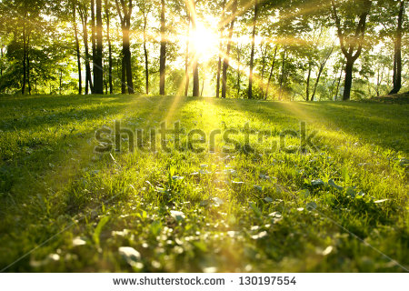 stock-photo-sunlight-in-the-green-forest-spring-time-130197554