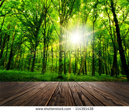 stock-photo-wood-textured-backgrounds-in-a-room-interior-on-the-forest-backgrounds-114391438
