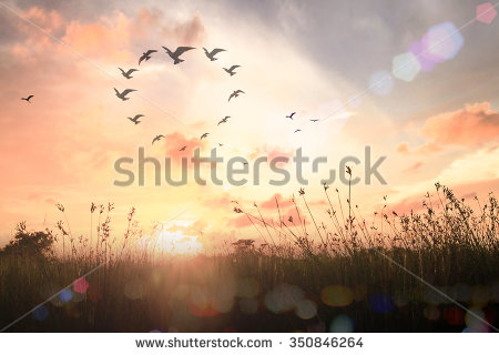 stock-photo-bird-flying-in-heart-shape-life-csr-unity-peace-one-god-respect-synergy-animal-veteran-350846264.jpg