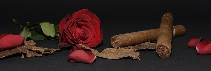 rose-1473695_960_720