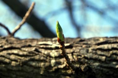 twig-18078_960_720.jpg